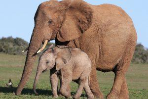 robin_elephants