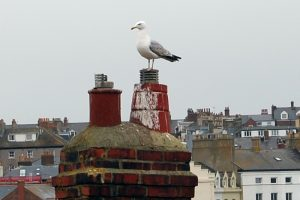 whitby_gallery_15